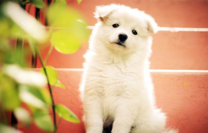 dog-1443468_1280