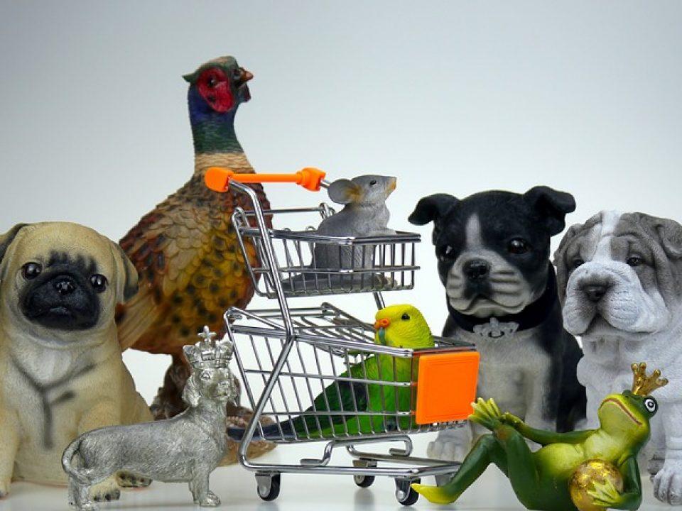 ציוד לבעלי חיים אונליין