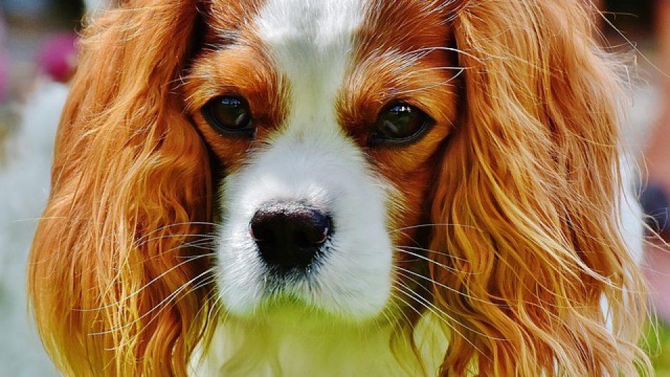 dog-1606585_640