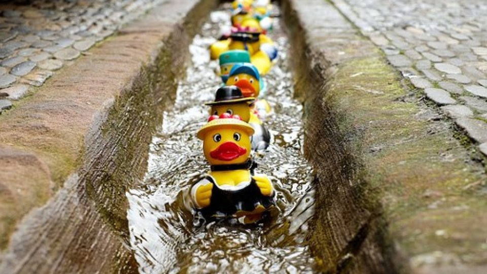 rubber-duck-1401225__340[1]